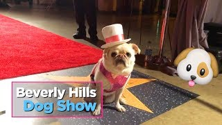 Celebs and dogs at the 2019 Beverly Hills Dog Show