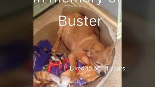 In memory of my pets that passed away in 2013-2016
