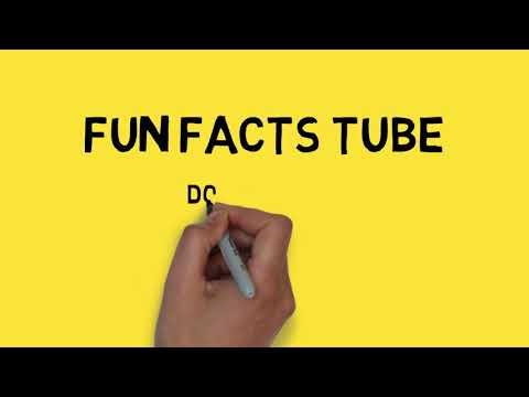 Kontes Adu Bagong 'Anjing nya EDAN Banget'