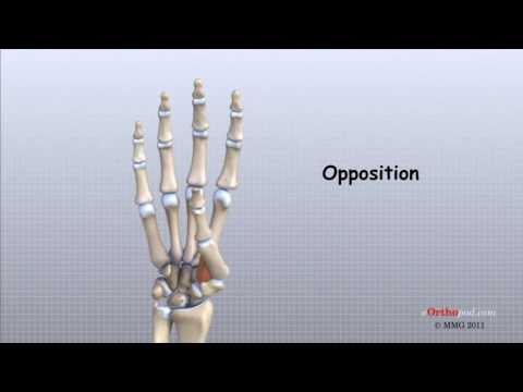 Osteoartroza deformantă Preparate condoprotectoare pentru articulațiile teraflex