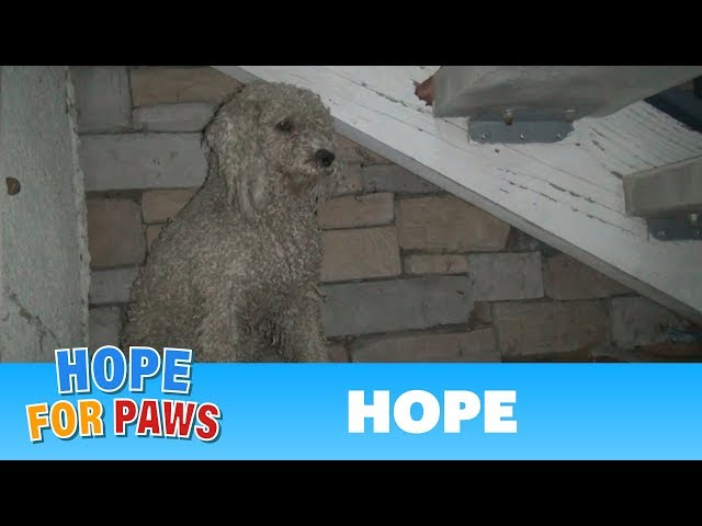 TBT: Homeless poodle needed help, but was too scared to ask.  Watch the amazing transformation :-)