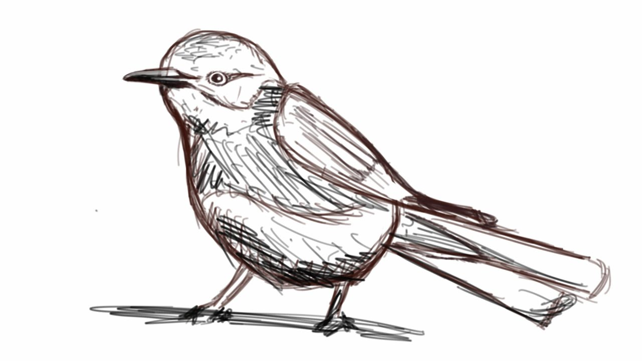How to Draw a bird in less than 3 minutes - YouTube