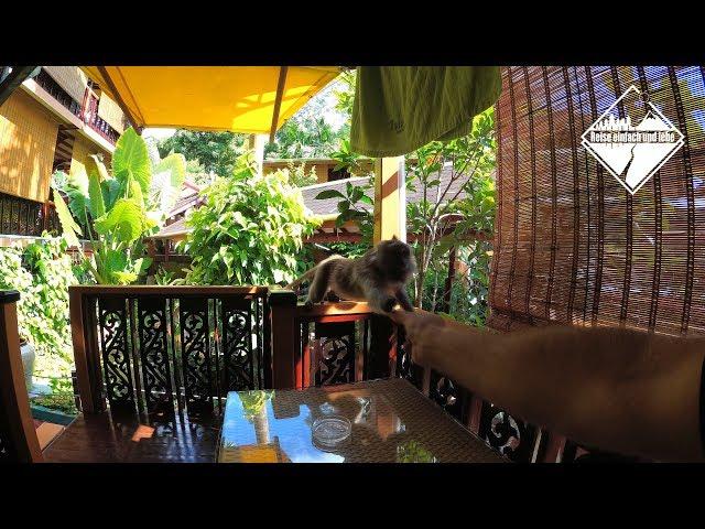 Hungrige Makaken • Vlog #69