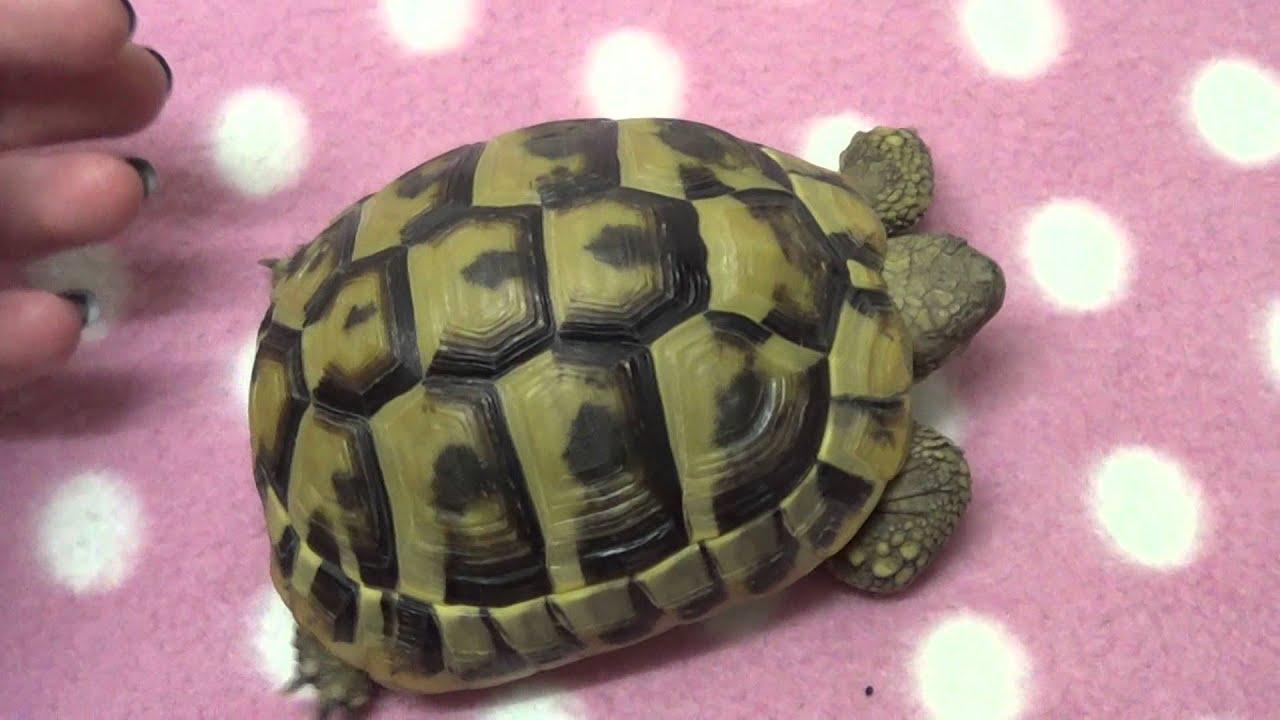 Tortoise Anatomy - YouTube