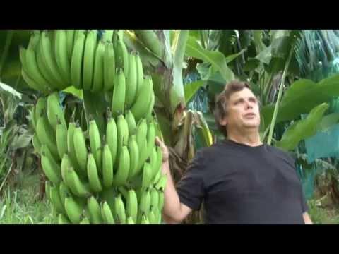 La Banane Biologique de la Martinique.
