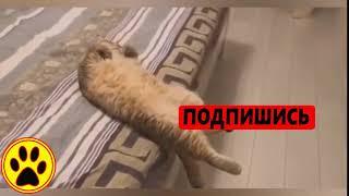 животные приколы видео смотреть бесплатно про кошек,