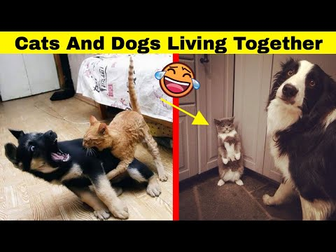 Hilarious Times Cats And Dogs Live Together