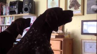 Dogs Listen To Themselves Howling