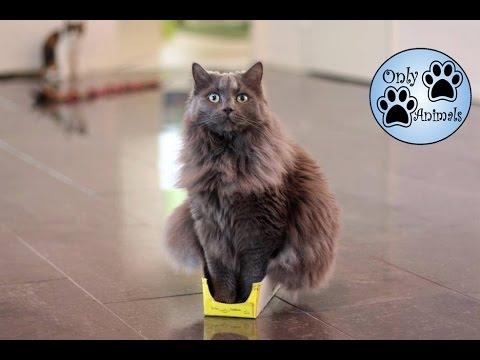 black cat purse