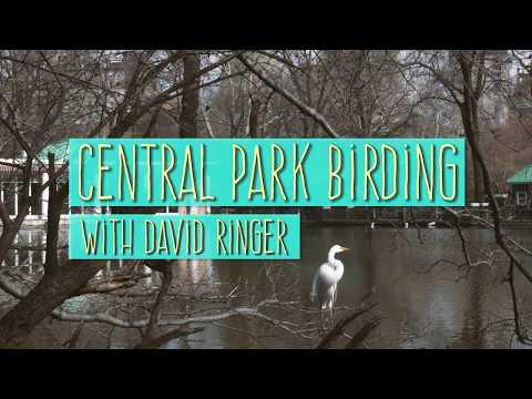 Central Park Birding   National Audubon Society
