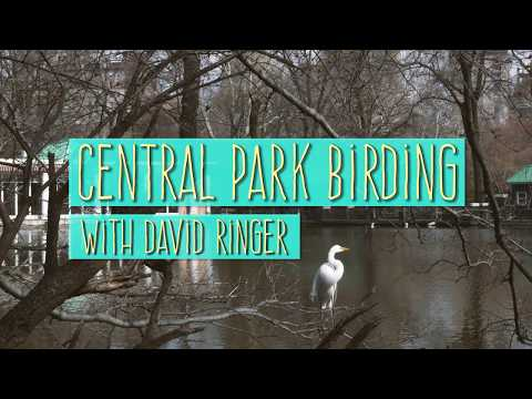 Central Park Birding | National Audubon Society