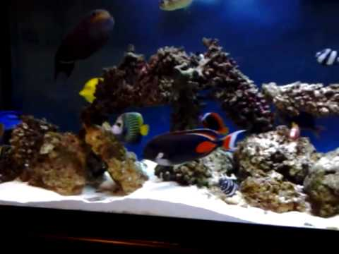 Saltwater Fish only tank (update)    YouTube