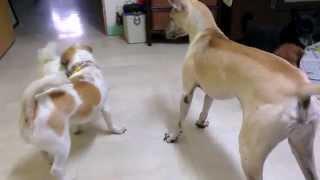 狗版陰屍路.......你們是想吃了彼此嗎?