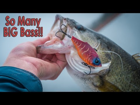 One Of My BEST Fishing Days EVER - Fishing A Lipless Crankbait (How-To)