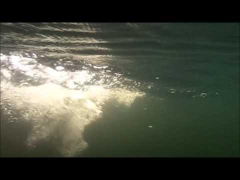 Sportfishing Dalsland