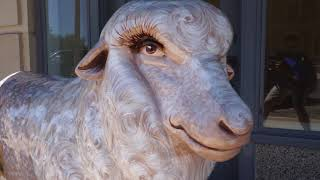 New Fiberglass Sheep at the Cactus Hotel