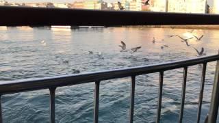 Martılar Kadıköy slowmotion