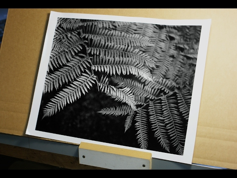 Film Photography - Making the Fine Print - #14 of 14