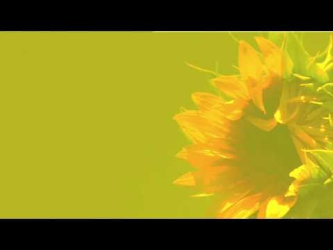Alle Farben - Sunflower Yellow (43)
