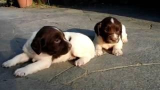 子犬が生まれていますよ http://www.woof.jp/ess.html.