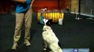 Agility Training for Dogs : Get Your Dog's Attention During Dog Agility Training