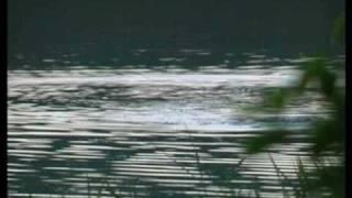 The secret otters of Haddo Lake.wmv