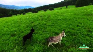 Российская Швейцария   АЛТАЙ(Алтай описать невозможно. Его нужно увидеть своими глазами!, 2016-02-14T14:44:50.000Z)