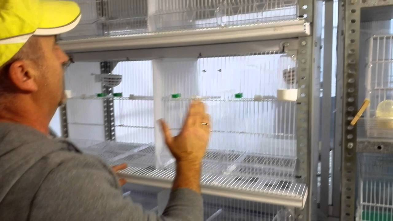 Jaula cr a de canarios hecha con una estanter a youtube for Jaulas para cria de peces