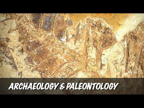 Dino-Lite Applications: Archaeology & Paleontology