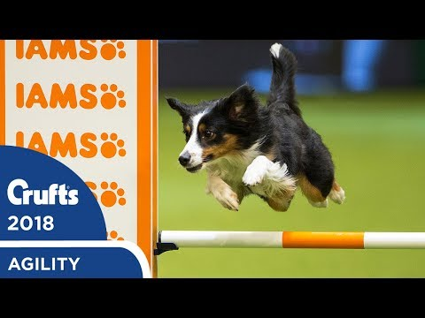 Agility - Crufts Large Novice & Medium ABC Final (Agility) Part 1 | Crufts 2018