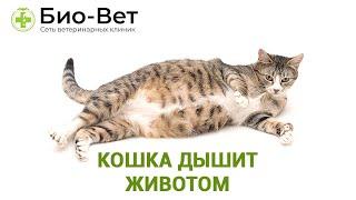 Кошка дышит животом. Ветеринарная клиника Био-Вет.