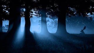 """Крипипаста """"Огни в ночном лесу"""", Том Сойер, страшная история об ужасе тайги"""