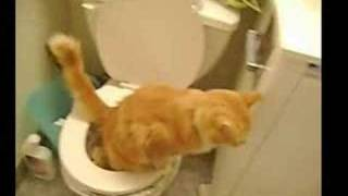 Cat on the Toilet! Toilet training Picnic - better quality