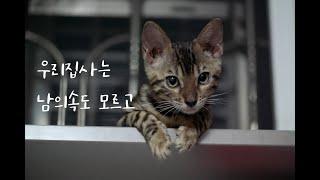 [고양이키우는개발자]뱅갈 새끼 고양이 설사 하는 이유를…