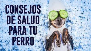 9 Consejos Para Ayudar a Mantener a Tu Perro Saludable | Trucos Para La Salud Canina