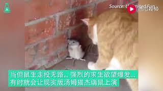 现实版汤姆和杰瑞,这些老鼠的求生欲可以说是非常强了