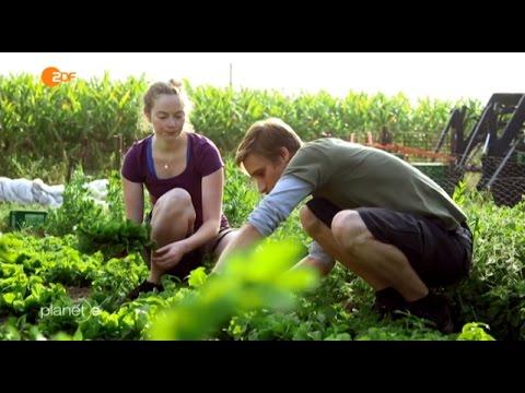 Solidarische Landwirtschaft  - Verbraucher finanzieren Bauernhöfe