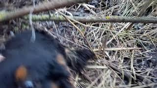 Спасаю собаку из петли