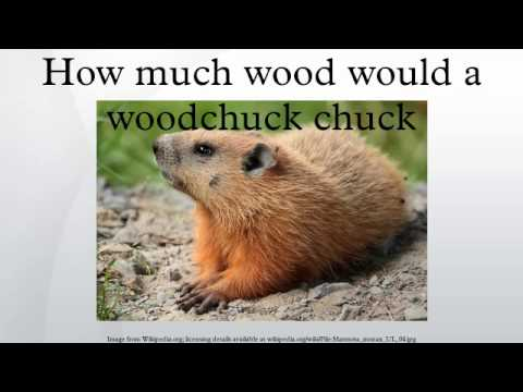 How much wood would a woodchuck chuck - YouTube
