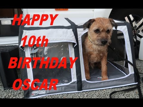 100 - Oscar the Border Terrier is Ten Years Old