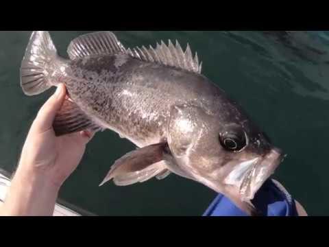 Half Moon Bay, CA Fishing (November 2018)
