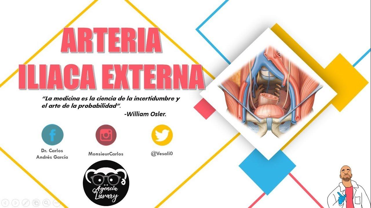 Anatomía - Arteria Iliaca Externa (Origen, Trayecto y Relaciones ...