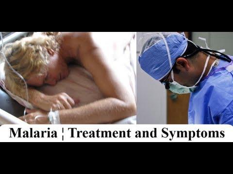 Malaria ¦ Symptoms and Treatment