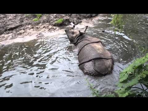 Diergaarde Blijdorp Zoo in Rotterdam, Netherlands | Diergaarde Blijdorp Zoo Travel Videos Guide