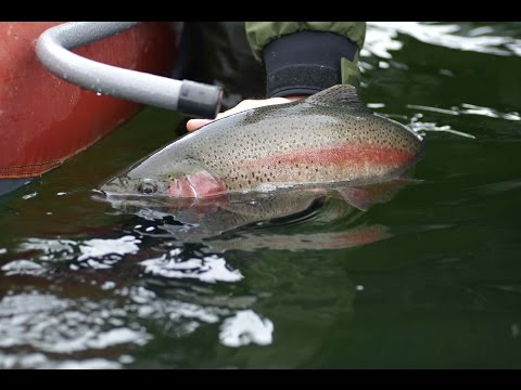 Parklands Monster Trout | Russell Inn Manitoba