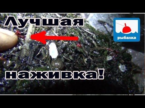 Самая лучшая наживка для линя найдена! + отчёт о рыбалке