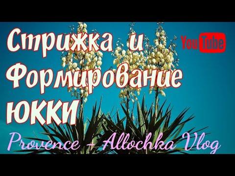 ЮККА/Обрезка и Формирование /По просьбам подписчиков