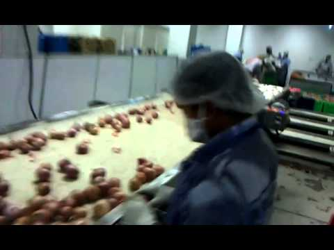 Onion Processing & Packaging Line (Fresh) By Mahatma Brijmohan Technicals, Aligarh, India