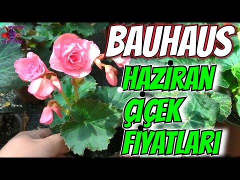BAUHAUS \