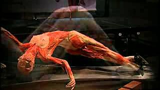 голая анаотмия доктора Хагенса flv